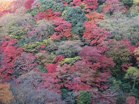 10%箕面の紅葉IMG_4024.JPG
