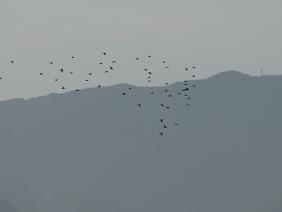10%鳥の集団IMG_5633.JPG