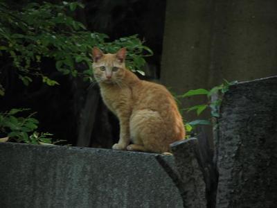 20%IMG_6887野良猫.JPG